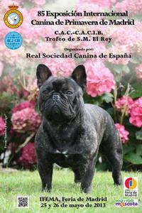 85 exposición canina internacional de primavera en Madrid