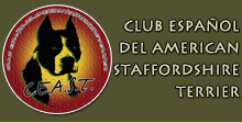 club American staffordshire terrier