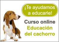 Curso online de Educación del cachorro de Royal Canin