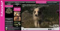 Eukanuba TV te enseña a entrenar a tu cachorro de perro