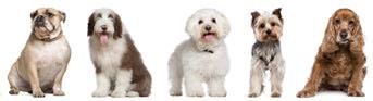 Fraudes y estafas en la venta de perros