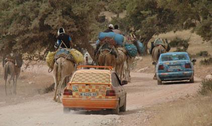 cachorros de perros colabora con rally a mauritania