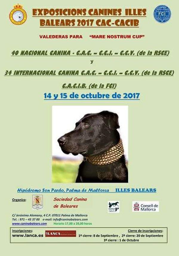 Exposición canina Islas Baleares 14 y 15 de octubre 2017