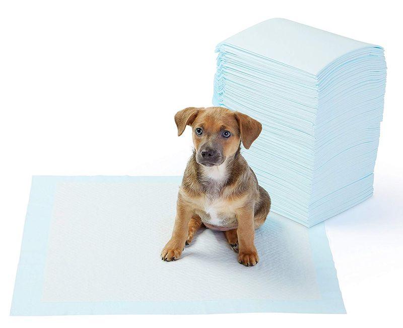 Empapadores para perros cachorros y ancianos.