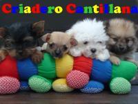 criadero cantillana